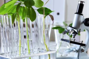 laboratoire plantes